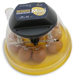 Mini Eco Manual Incubator eggs) from My Pet Chicken - ordering mine now, getting fall babies is a good thing for egg production if you don't live in too harsh of winter climates or can keep them indoors! Hatching Chickens, Bantam Chickens, Pet Chickens, Chicken Incubator, Egg Incubator, Backyard Poultry, Chickens Backyard, Backyard Farming, Poultry Supplies