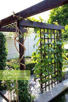 grape vine pergola pergola in small formal urban garden with grape vine ornamental grape vine pergola