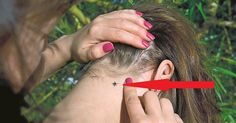 Use this tricky trick to not become a victim of ticks! I feel safe in nature Skull Tattoo Design, Dragon Tattoo Designs, Tribal Tattoo Designs, Sun Tattoos, Celtic Tattoos, Behind Ear Tattoos, Sugar Skull Girl, Tribal Sleeve Tattoos, Sugar Skull Tattoos
