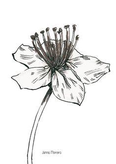 Black and White Flower on Behance