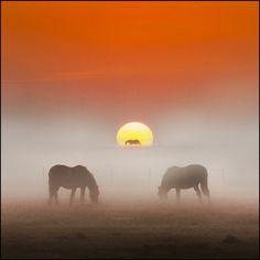 Three Horse Power By Adrians_art