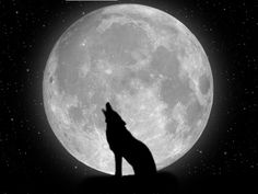 Wolf against the moon