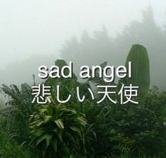 悲しい天使 sad angel uploaded by Sally on We Heart It Aesthetic Quotes Tumblr, Quote Aesthetic, Green Aesthetic Tumblr, Plant Aesthetic, Angel Aesthetic, Nature Aesthetic, Japanese Aesthetic, Sad Angel, Plants Quotes