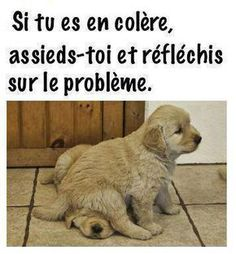 J'aime le français added a new photo — with Monik Rizo and Mohamed Amin Mrad. Facebook Humor, Humor Videos, Funny Cute, Hilarious, Frases Humor, Truth Of Life, Phonics Activities, Humor Grafico, Memes