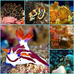 Sea slugs collage 6