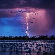 Photo by @randyolson Wood River Nebraska - This was the last night of the last trip for an @natgeo assignment on the Ogallala Aquifer. I had bedded down in the blind when the cranes started to land for the night just outside… then the storm rolled in. Sand Hill Cranes are the grassland birds of the great plains. They migrate from Siberia to northern Mexico. They counted 413,000 Sandhill Cranes on this evening… more than they've ever counted before. These conservation groups are working like…