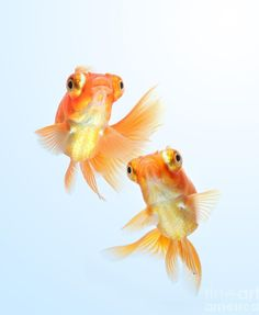 Goldfish - I want 2 to name Pepper and Pumpkin!!