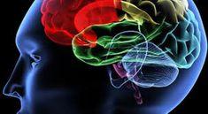 DE TODO UN POCO: Cincuenta y tantos..El cerebro después de los 50.....