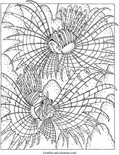 Welcome to Dover Publications Creative Haven SeaScapes Coloring Book Lionfish