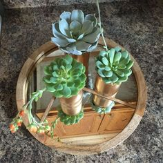 Upcycle regular tin cans into beautiful succulent planters.