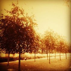 #leverdujour #parc #arbre #nature #calme #sérénité #flowleaf2015 Bien débuter la journée avec un levé de soleil sur la nature : prendre le temps d'observer les feuilles et écouter le vent ne serait-ce que 5 minutes. Apprécier ce silence matinal avant le tumulte de la ville et de la vie...