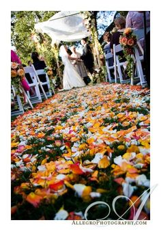 wedding aisle with fall flower petals  www.flyboynaturals.com