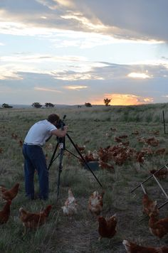 Down on the chicken farm for our autumn location (2012).