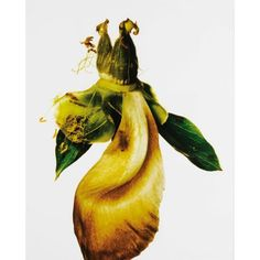Irving Penn (1917 - 2009), Peony/ Paeonia: Silverdawn, New York 2006. photo courtesy Sothebys