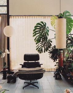 Monstera at the Eames house. Mid-century Interior, Modern Interior, Interior Architecture, Interior And Exterior, Interior Decorating, Monstera Deliciosa, Philodendron Monstera, Palm Springs, Piece A Vivre
