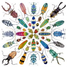 Explore the art of Lucy Arnold. Delight in nature's colorful creatures. Lose yourself in cosmic abstracts. Revel in imaginary, surreal scenes of digital art. Illustrations, Illustration Art, Motifs Animal, Bug Art, Insect Art, Beautiful Bugs, Bugs And Insects, Insects Names, Belle Photo