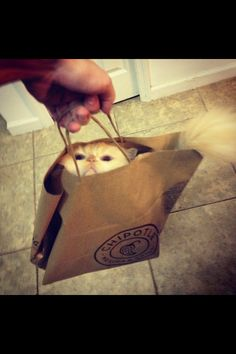 Chipotle sells cats now?