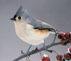 Tufted Titmouse (90 pieces)