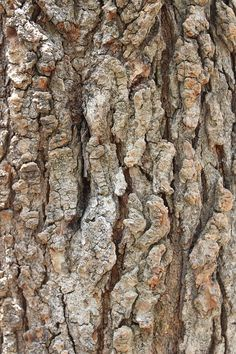 Game Textures, Textures Patterns, Stone Texture, Wood Texture, Oak Tree Bark, Scenery Paintings, Wood Detail, Leaf Flowers, Photo Tree