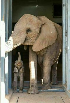 Mommy and baby elephants!  I don't understand why people hunt these wonderful creatures, and treat them terribly!