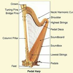 Harp Center specializes in harps. We help people of all ages fulfill their dreams of owning and playing one of these beautiful, spiritual, and magical instruments. You, too, can learn to play the harp! Music Ed, Music Stuff, Sylvia Woods, Teaching Music, Music Lessons, Musical Instruments, Lakeland Florida, Runes, Tampa Bay