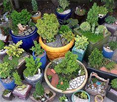 Janit Calvo of Two Green Thumbs Miniature Garden Center Miniature Trees, Miniature Fairy Gardens, Gnome Garden, Garden Pots, Cut Garden, Garden Sheds, Bonsai, My Secret Garden, Fairy Houses