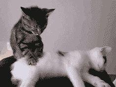 http://www.reactiongifs.com/wp-content/uploads/2011/06/kitty_massage.gif