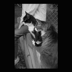 https://flic.kr/p/tjZwya | Ruby and Chee June 2015  #cat #smallcats #blackandwhitephotography