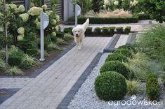 Lawendowy zawrót głowy - strona 1318 - Forum ogrodnicze - Ogrodowisko