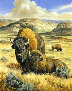 Linda Picken Art Studio / Buffalo On the Range. Wildlife Paintings, Wildlife Art, Animal Paintings, Buffalo Animal, Buffalo Art, Native American Pictures, Native American Art, Buffalo Pictures, Buffalo Painting