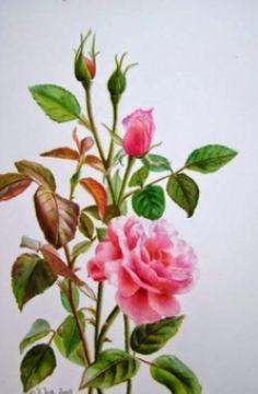 pinturas-de-cuadros-de-flores-pintadas-con-acuarela