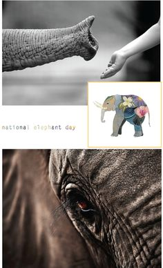 National Elephant Day (photo sources under photo in blog post)!