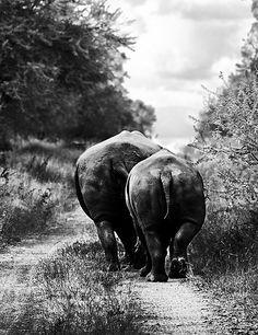 Cute rhino butts =P