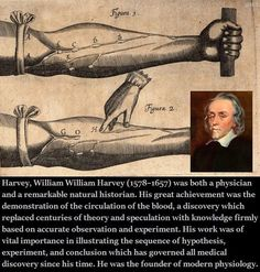 william harvey his discovery of William harvey © harvey was an english physician who was the first to describe accurately how blood was pumped around the body by the heart william harvey was born in folkestone, kent on 1 april 1578 his father was a merchant harvey was.