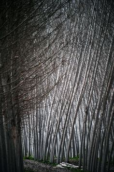 These Photos From National Geographic Readers Are Beyond Beautiful    Black poplars are pictured at Fuente Vaqueros, near Granada on February 17, 2013. (Cristina Quicler / AFP / Getty Images)