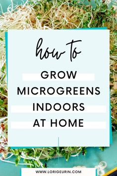 Learn how to grow microgreens indoors at home in this quick and easy tutorial and video. Microgreens and sprouts are fun and easy to grow using this no soil method. Plus, they're so nutritious to eat! Learn about setup, diy, and where to get an affordable starter kit that's perfect for anyone.   #microgreensgrowingindoor #microgreenssetup #microgreensvideos #microgreensdiy #microgreensnosoil #microgreenskit #microgreensjar Alfalfa Seed, Alfalfa Sprouts, Growing Sprouts, Growing Microgreens, Broccoli Sprouts, Hobbies To Try, Hobbies That Make Money, Stress Management Course