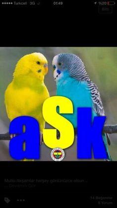 http://www.fenerbahce.org/detay.asp?ContentID=44071 16.03.2015 Gençlerbirliği 2 -1 Fenerbahçe