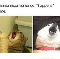 Tagged with funny, memes, dump, dank; Shared by FuckThisFuckingUsername. Dump it like it's dank You Funny, Funny Cute, Funny Stuff, Scream Meme, Walmart Pictures, Funny Animals, Cute Animals, Funny Car Memes, Dogs