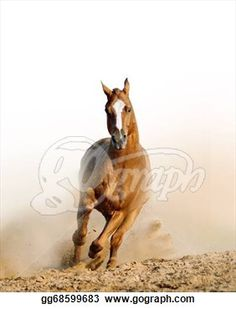Pictures - Wild horse in dust. Horse Photos, Wild Horses, Art Images, Stock Photos, Illustration, Pictures, Photography, Animals, Art Pictures
