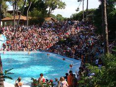 Spectacle d'otaries du zoo de La Palmyre | Pays Royannais Charente-Maritime Tourisme #charentemaritime | #zoo | #LaPalmyre | #animaux