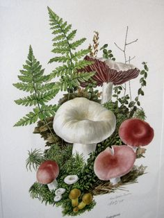 Mushroom Art, Anne Ophelia Dowden Signed Print, Matted and Framed, Vintage 1978 on Etsy, $45.00
