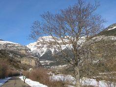 Invierno Torla. Mondarruego y nogal. Nevado.