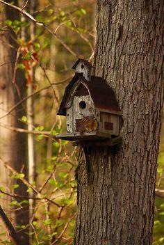 :) Bird House Ideas http://socialaffiliate.wix.com/bird-houses http://buildbirdhouses.blogspot.ca/