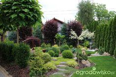 Palos Park, Privacy Landscaping, Beautiful Gardens, Nova, Gardening, Landscape, Plants, Ideas, Decor