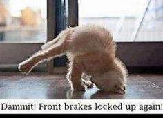 Cat with brake issues!