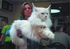 Book Reader's Heaven: File M for Murder by Miranda James - Perfect for a Whodunit Weekend! Celebrate Big Cats, Especially Maine Coons!
