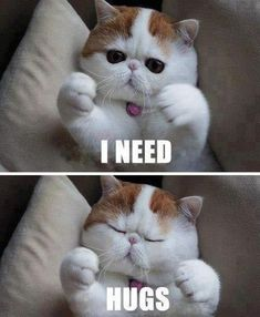 I NEED HUGS - Funny Memes. The Funniest Memes worldwide for Birthdays, School, Cats, and Dank Memes - Meme Funny Photo Memes, Funny Memes Images, Funny Cat Memes, Funny Cat Videos, Cats Humor, Pet Memes, Funny Humor, Pet Videos, Baby Videos