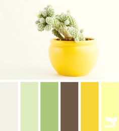 Potted Hues - http://design-seeds.com/index.php/home/entry/potted-hues2