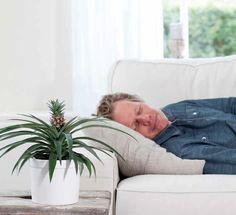 Er bestaat zelfs een anti-snurk-plant, namelijk: Bromelia Ananas. Deze plant heeft een speciaal enzym dat snurken tegen gaat.