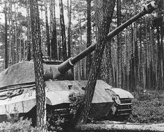 A King Tiger in the Ardennes knocking down a tree.